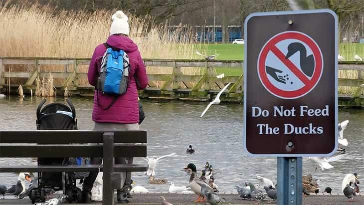 Уток в парке не кормить